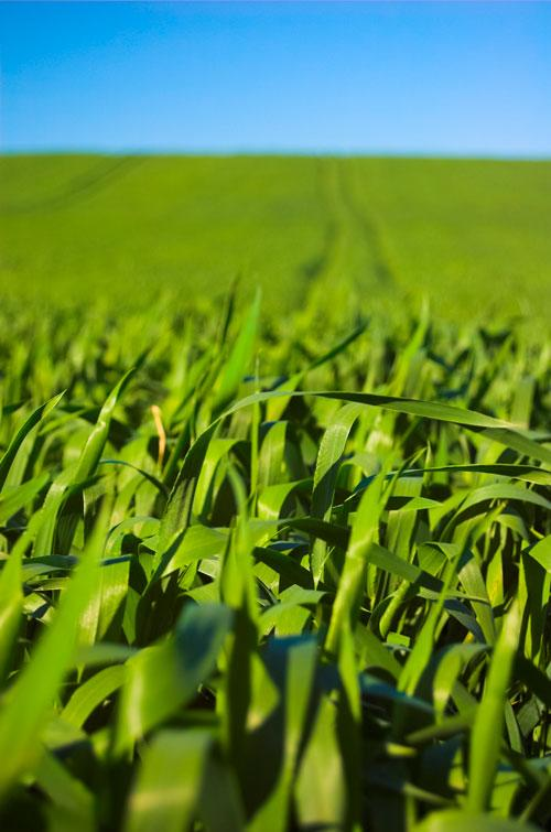 agricolas01