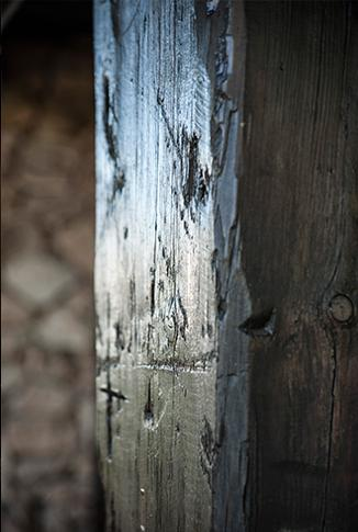 carcoma y termitas