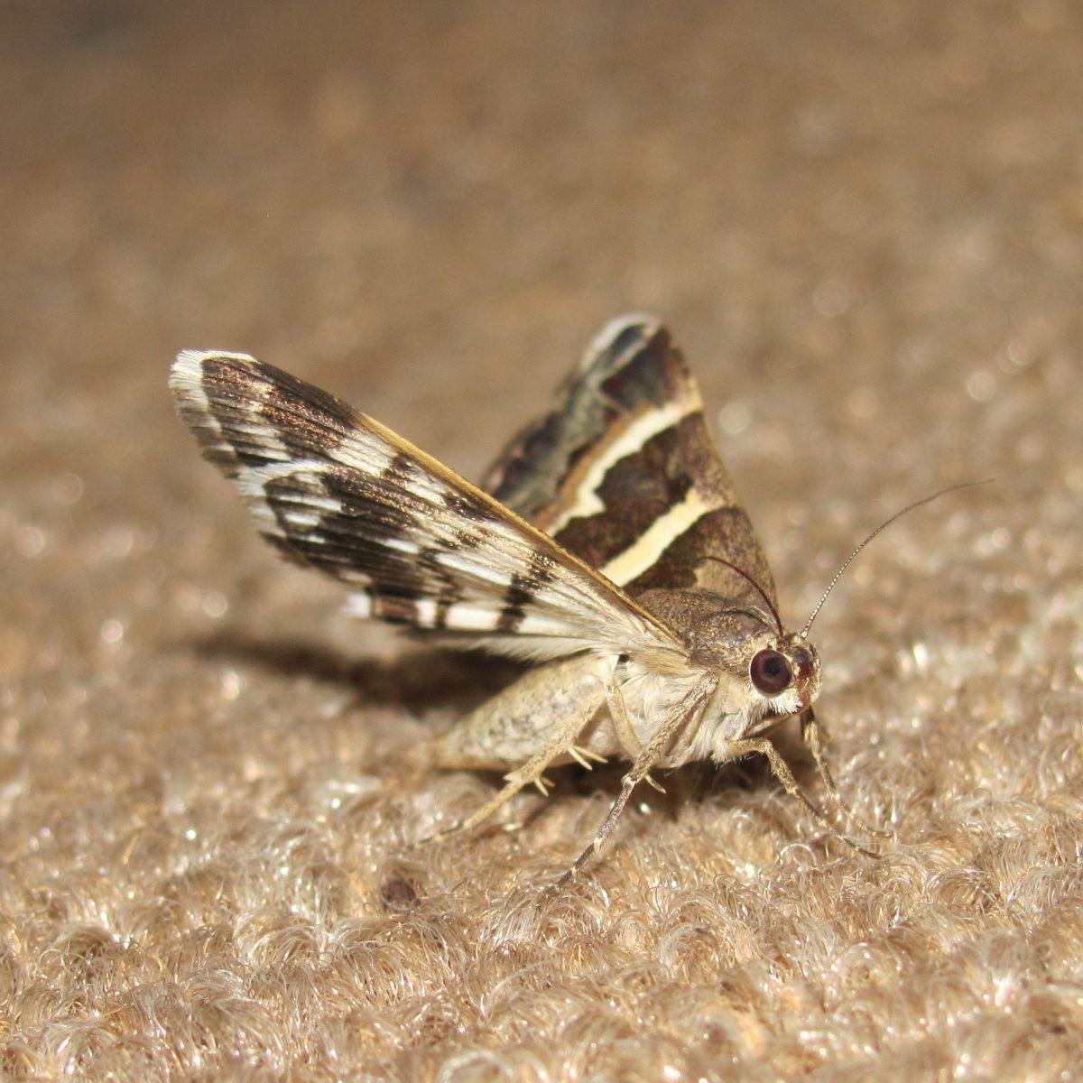 moths-265667