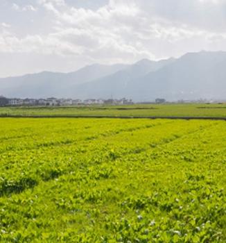 agricolas-bg